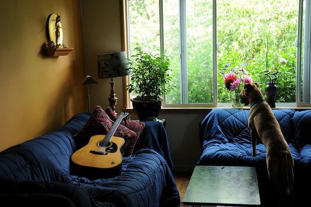 palindrome6996  sofa pillows