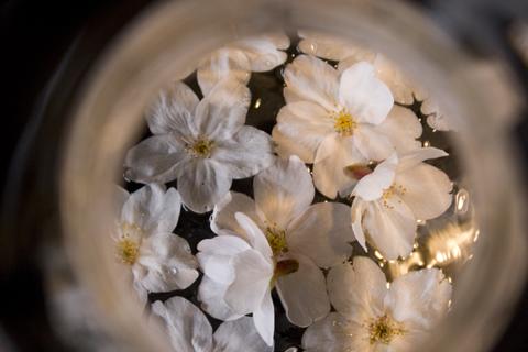 ヴィンテージケメックスにも桜を入れてみました